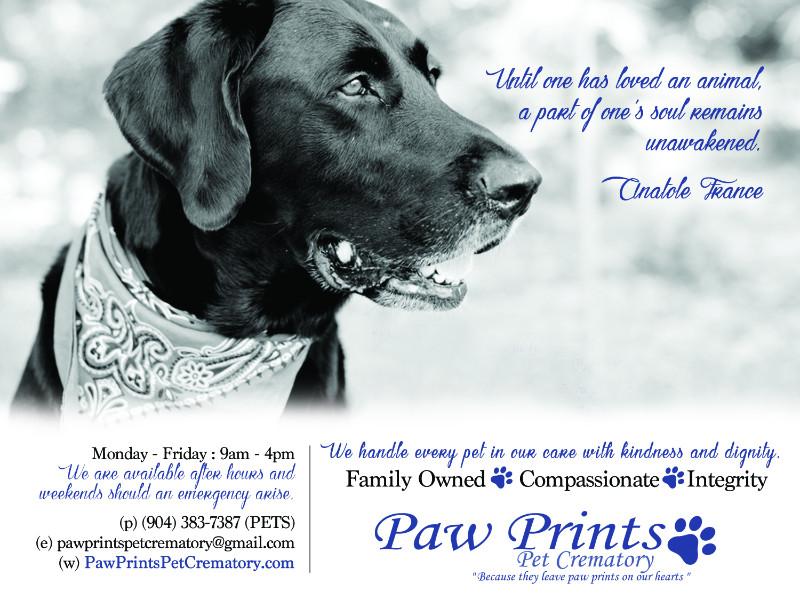 Paw-prints-08-16