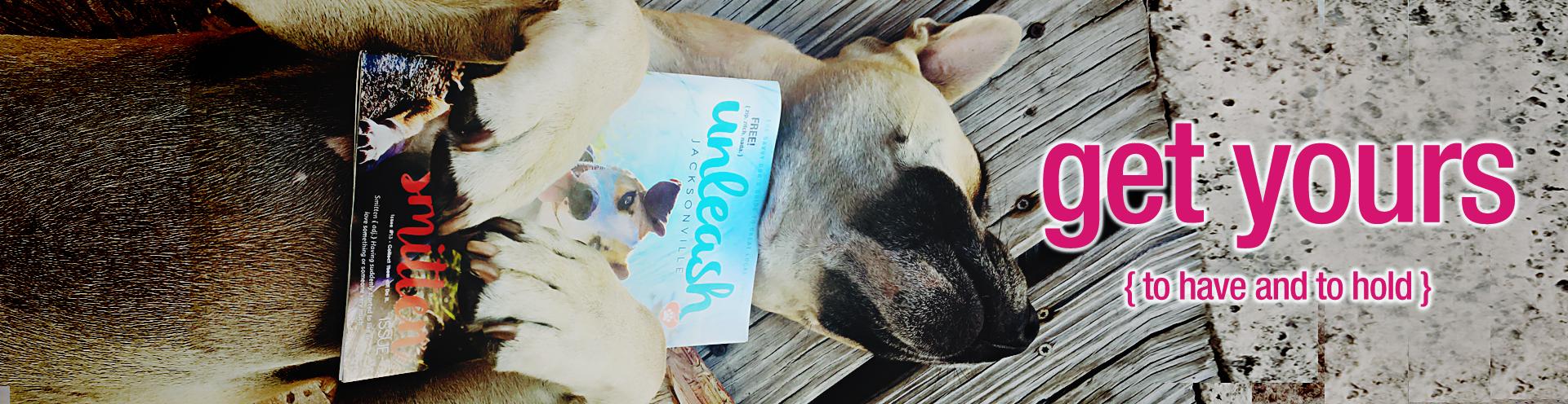 Distribution Beach Dog