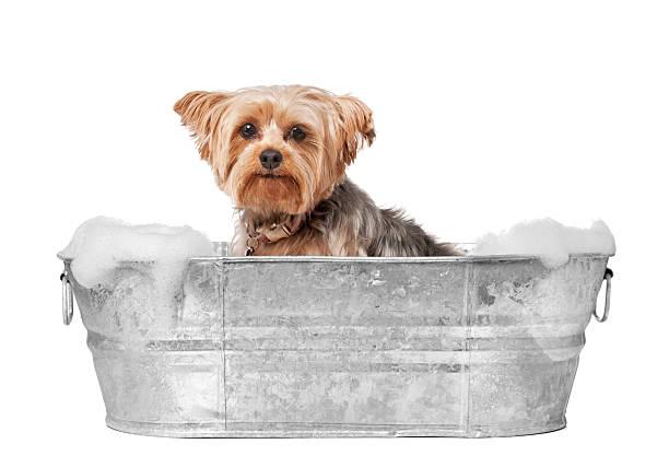 Dog-Groomer-1