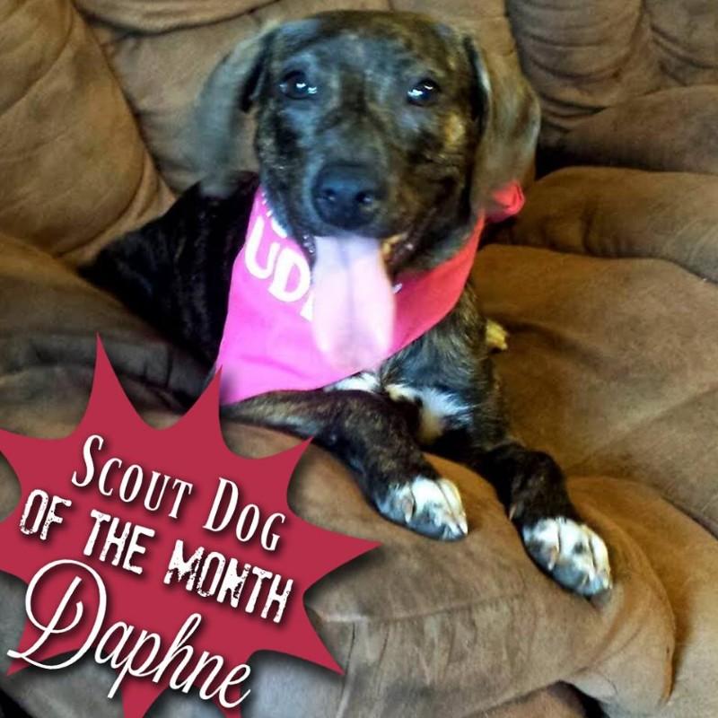 Scout-dog-Daphne