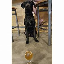 Taproom-dogs
