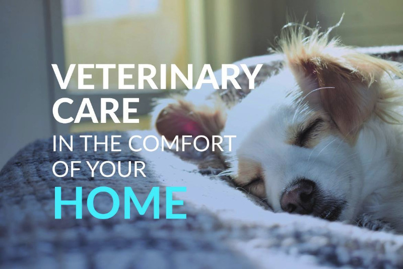 your-home-vet