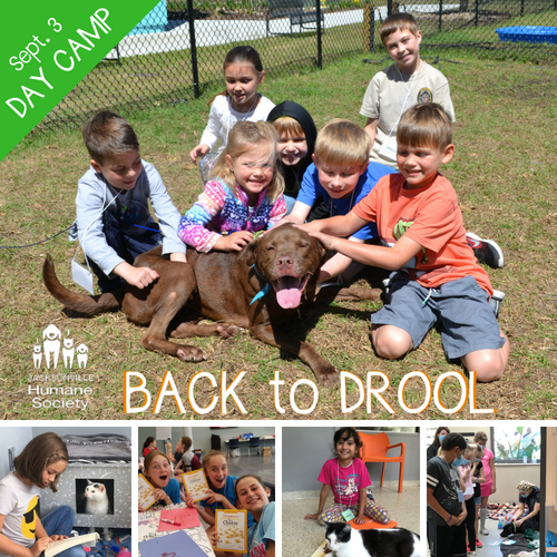 JHS Day Camp - BACK to DROOL - Unleash Jacksonville