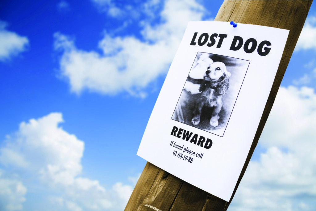 tips to find lost pets of jacksonville